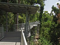 Прогулочный трек (Mamu canopy walkway)