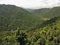 Вид со смотровой башни Mamu canopy walkway