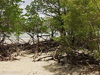 Мангры возле моря.