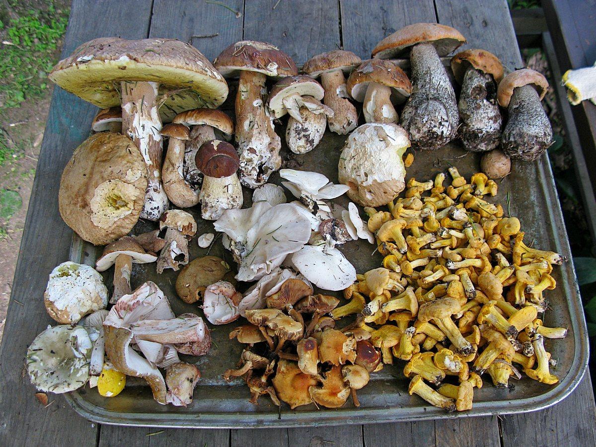 Результаты грибных походов. Автор фото: Олег Савельев