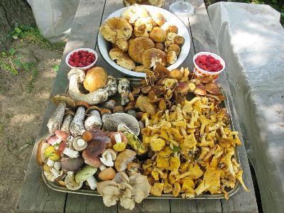 Результаты грибных походов Автор: Олег Савельев