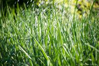 Трава под дождем