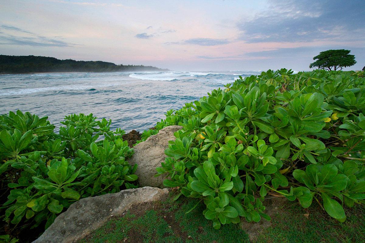 Черепашья бухта, остров Оаху. Автор фото: Ольга Мелхайзер