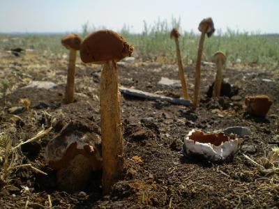Июнь 2008. Волгоградская область, Иловлинский р-н, Природный парк \