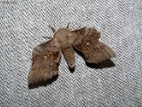 s:бабочки