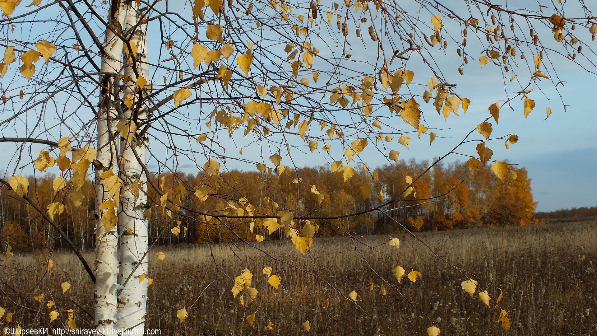 Октябрь. Автор фото: Константин Ширяев