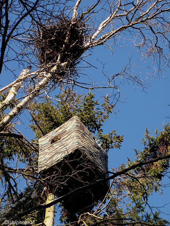 лабаз 17 метров над землёй. Автор фото: Константин Ширяев