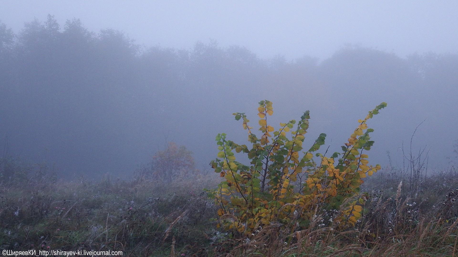 Туман. Автор фото: Константин Ширяев