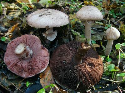 Ставропольский край, широколиственный лес, 1 ноября 2006 Автор фото: Ирина Уханова