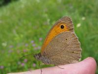 s:бабочки,s:чешуекрылые,s:дневные бабочки