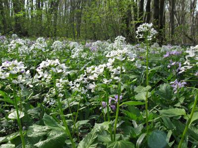 Ставропольский край,широколиственный лес Автор фото: Ирина Уханова