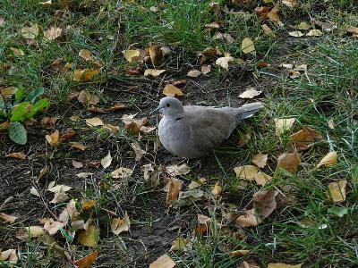 Ставропольский край, окраина г.Ставрополя,12 октября 2007г Автор фото: Ирина Уханова