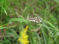s:бабочки,c:с темными полосами