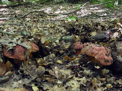 Ставропольский край, широколиственный лес Автор фото: Ирина Уханова