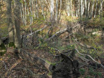 Ставропольский лес Автор: Ирина Уханова