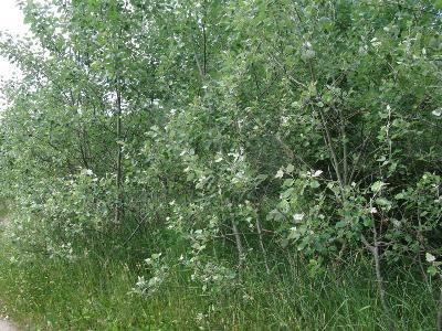 Ставропольский край, Мамайский лес, поросль молодых деревьев Автор фото: Ирина Уханова