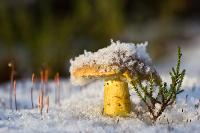 Зеленушка. Автор фото: Байбекова Светлана