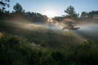 Рассвет над туманным болотцем
