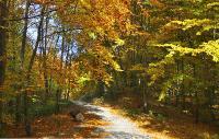 Солнечные краскиСнимок был представлен на фотоконкурс «Лето-Осень»
