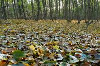 Осенние листьяСнимок был представлен на фотоконкурс «Лето-Осень»