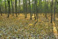После листопадаНочью был сильный ветер и стих только под утро.Снимок был представлен на фотоконкурс «Лето-Осень»