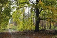 Старый букСтарое одинокое дерево, с которого опадают не только листья, но и ветки. :(Снимок был представлен на фотоконкурс «Лето-Осень»