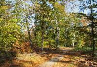 Солнечный лесСнимок был представлен на фотоконкурс «Лето-Осень»