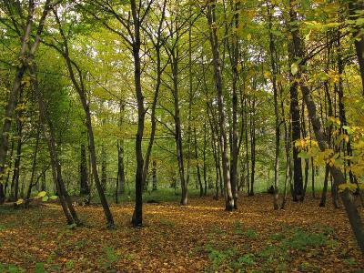 Осенний лес Автор: Фотоконкурс ЛЕТО-ОСЕНЬ