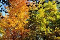 Осенняя листваСнимок был представлен на фотоконкурс «Лето-Осень»