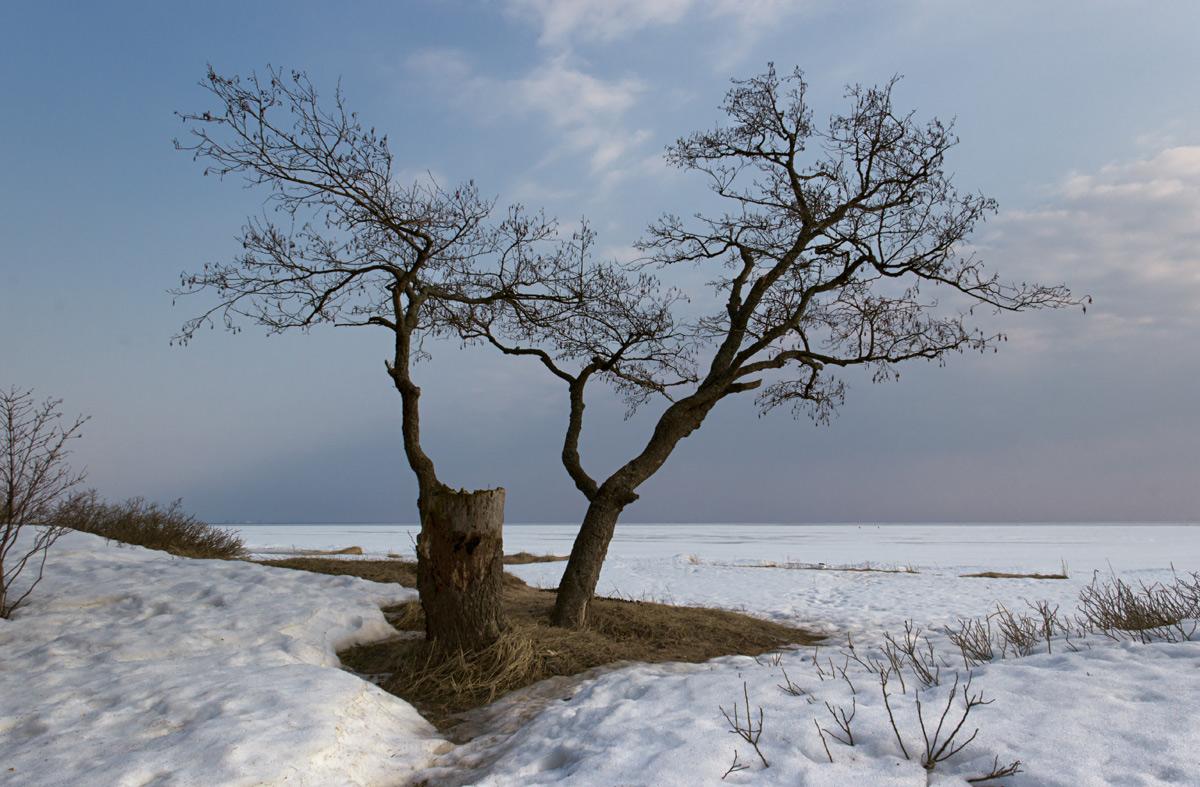 Зима отступает.. Автор фото: Байбекова Светлана (С-Петербург)