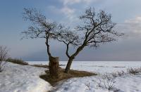 Зима отступаетАвтор фото - Светлана Байбекова (г. С-Петербург)