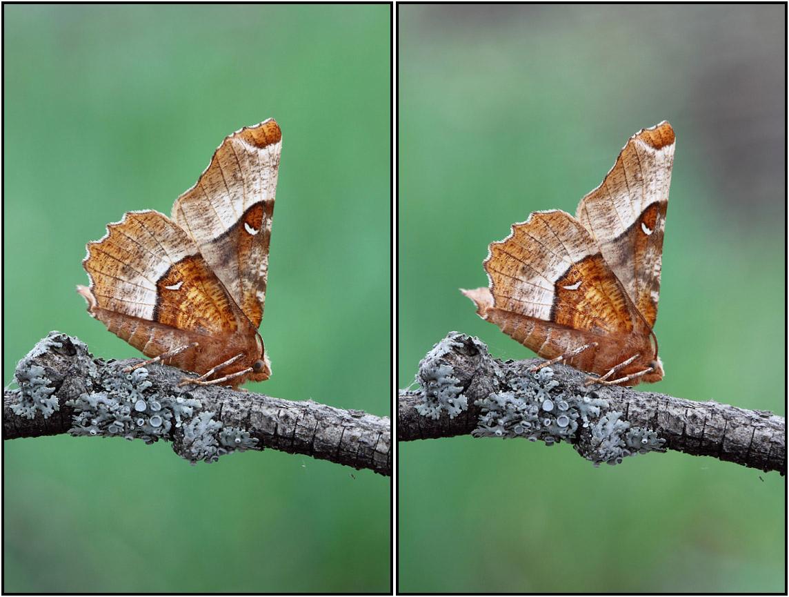 Весенняя ночная бабочка. Автор фото: Сергей Таланов (г.Вятка)