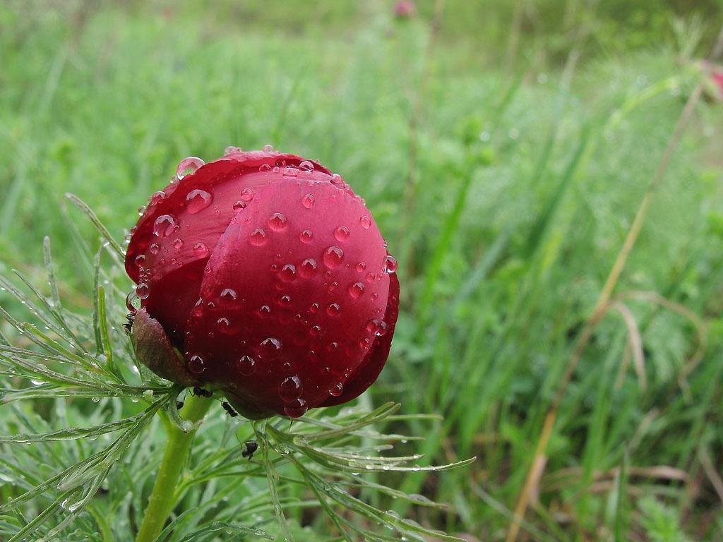 Дождь дарит бриллианты всем. Автор фото: Уханова Ирина (г.Ставрополь)