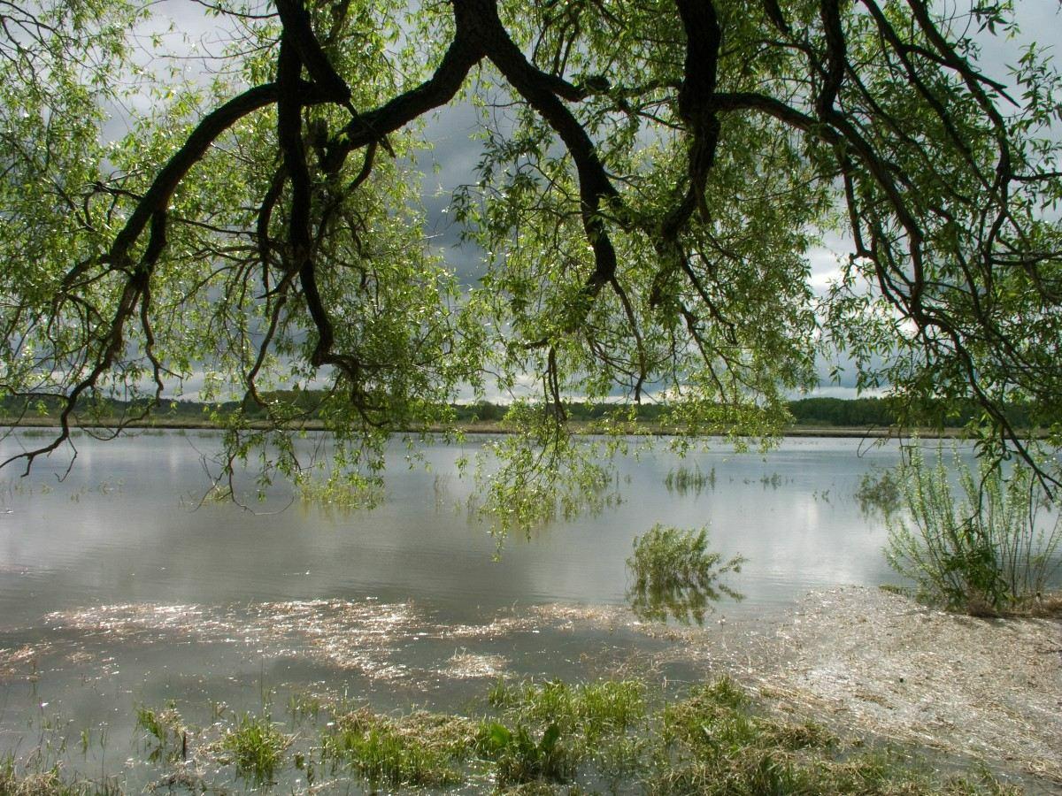 Весенний разлив. Автор фото: Капитонов Владимир (г.Ижевск)