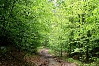 В букoвoм лесу