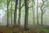 Заветный лес весенний. Автор фото: Метте Йохан (Германия)