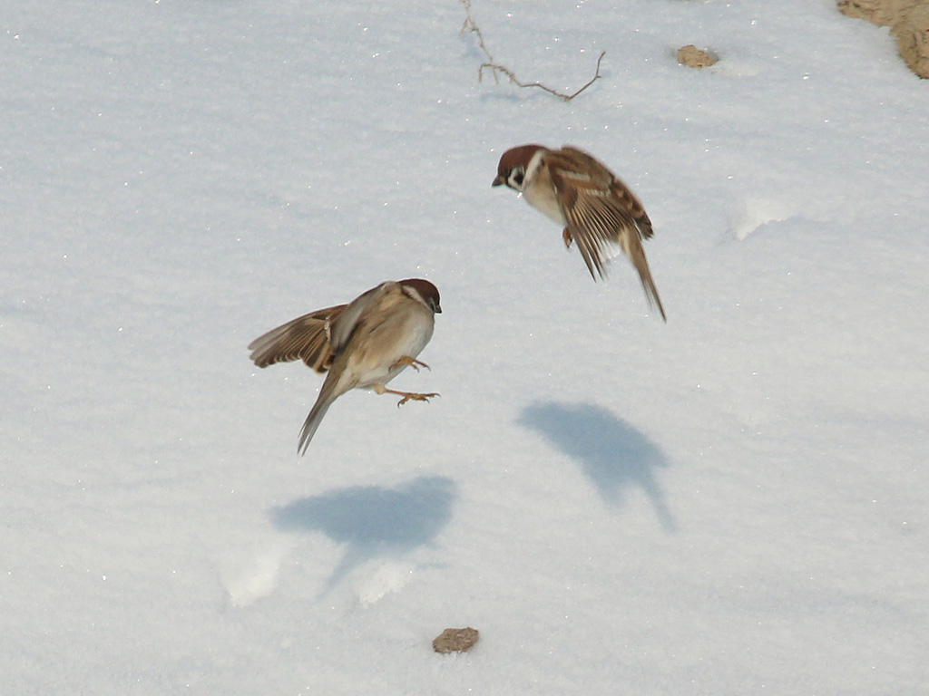 Зависнуть на морозце. Автор - Фокина Антонина, г.Алматы, Казахстан