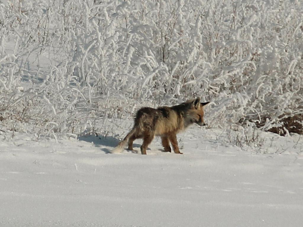 После зимней рыбалки. Автор фото: Фокина Антонина, г.Алматы, Казахстан