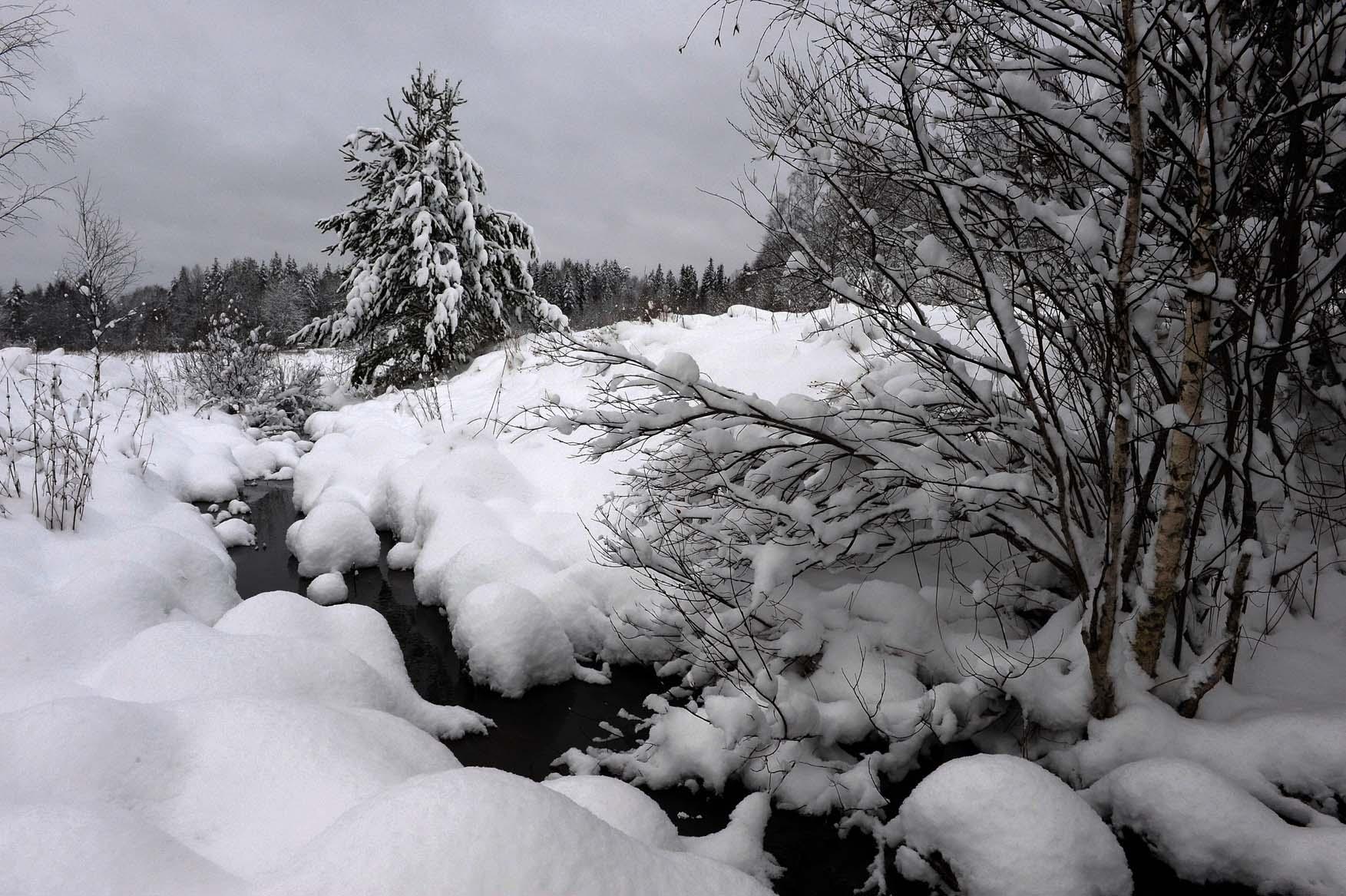 Серый, серый, серый январь.... Автор фото: Костюкевич Сергей, г.Санкт-Петербург