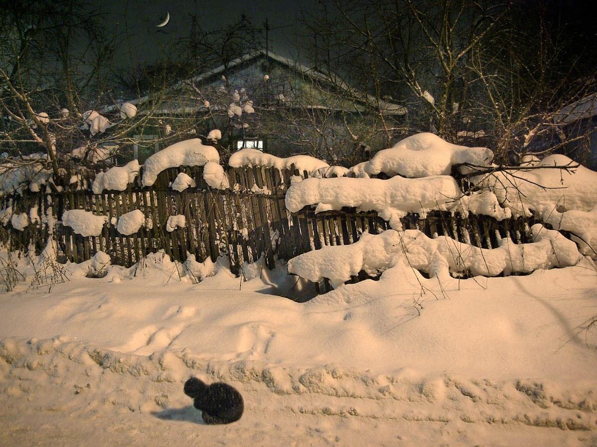 Под зимним фонарем. Автор фото: Семенов Юрий, г.Мытищи