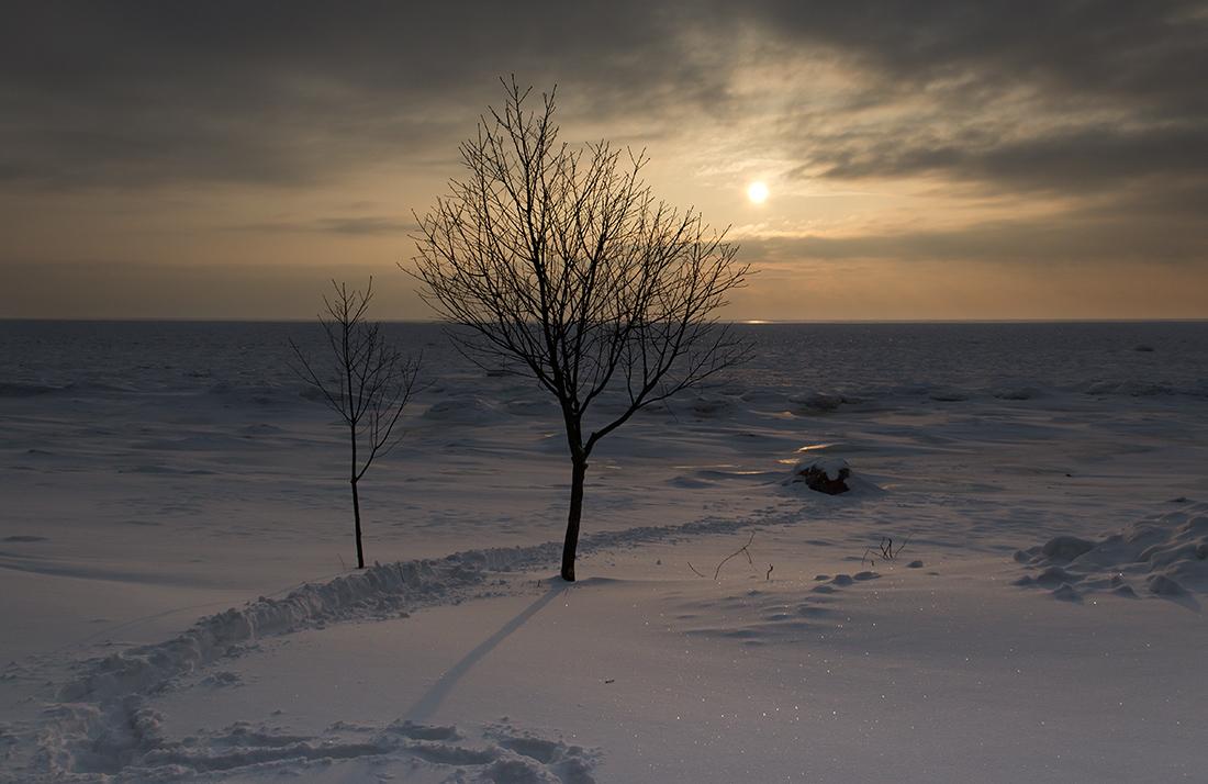 дуэт. Автор фото: Байбекова Светлана, г.Санкт-Петербург