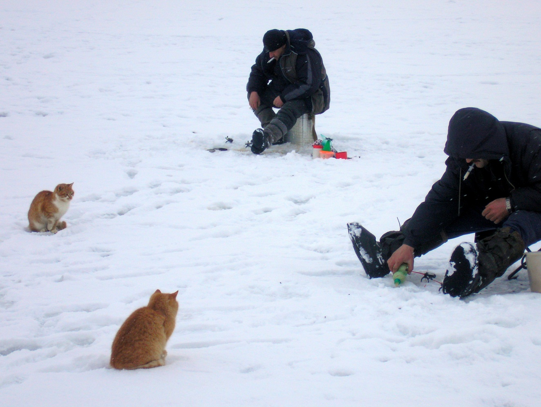 По последнему льду.. Автор фото: Яцковский Валерий, Беларусь