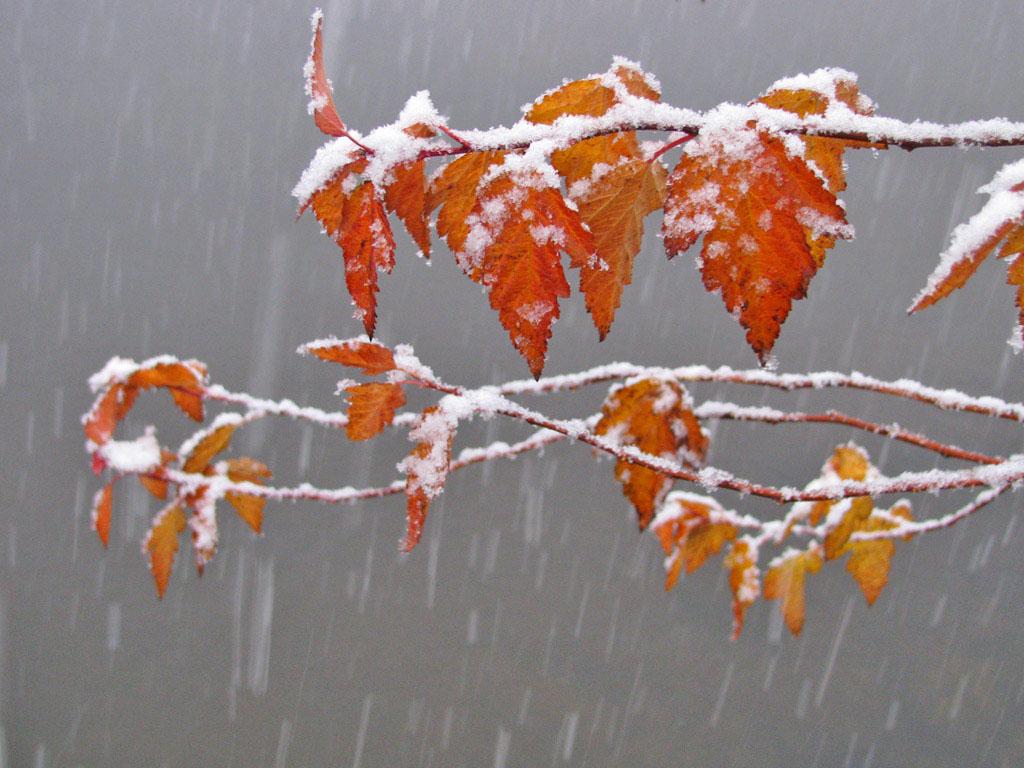 Первый снег. Автор - Матершев Иван, г.Москва