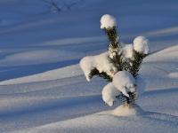 ***Старые тэги:январь,2012,зима,снег,природаАвтор фото - Владимир Брюхов (г.Кирово-Чепецк)