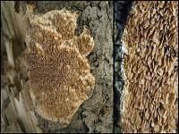 i:деревообитающие,c:желто-коричневые,c:коричневые
